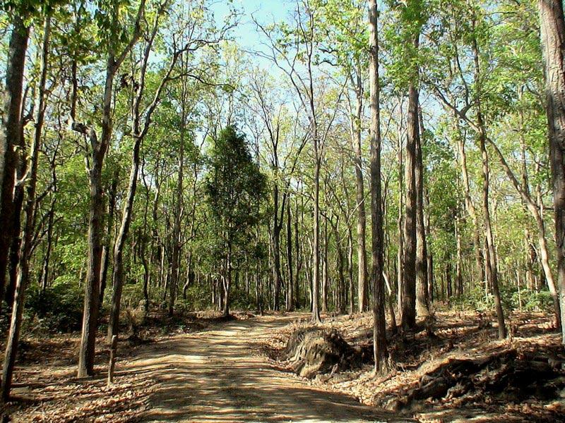 Achanakmar Wildlife Sanctuary Tour