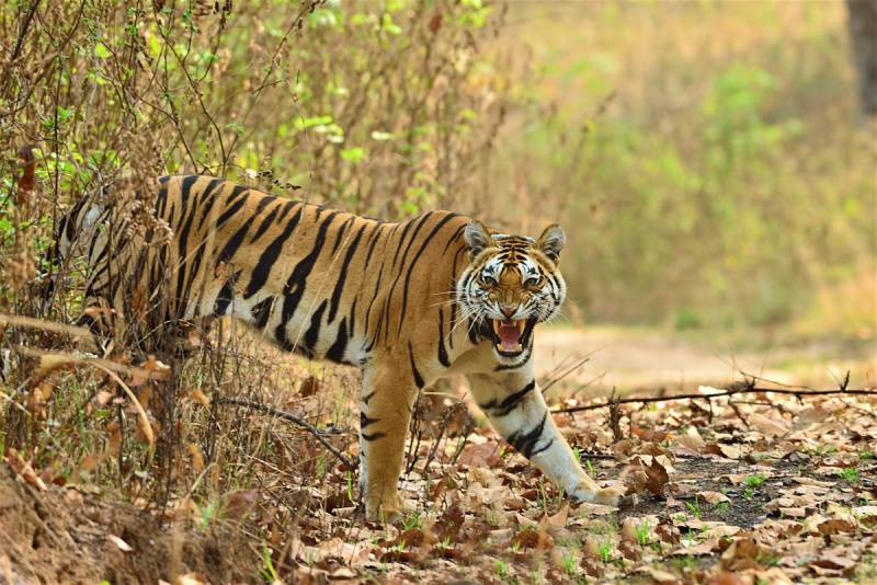 Kanha Bandhavgarh Tour Package