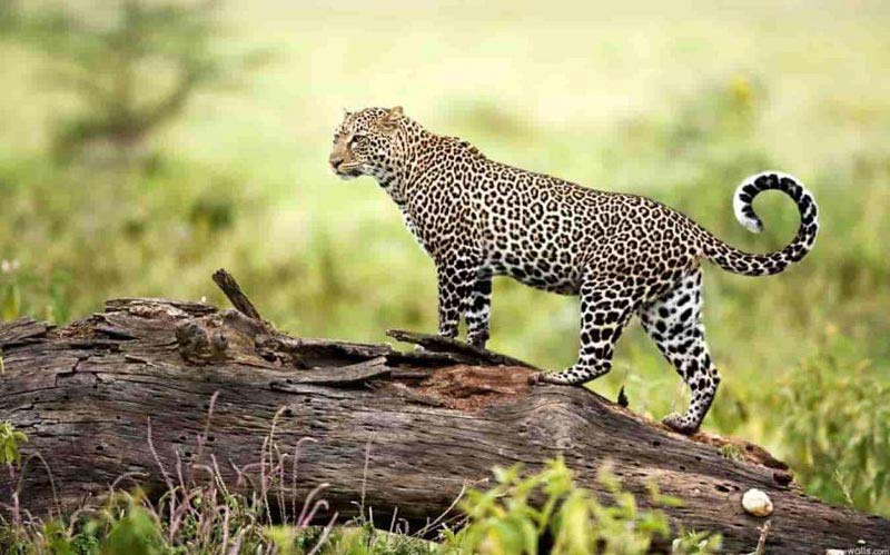 Dandeli Wildlife Sanctuary 2 Nights & 3 Days Tour