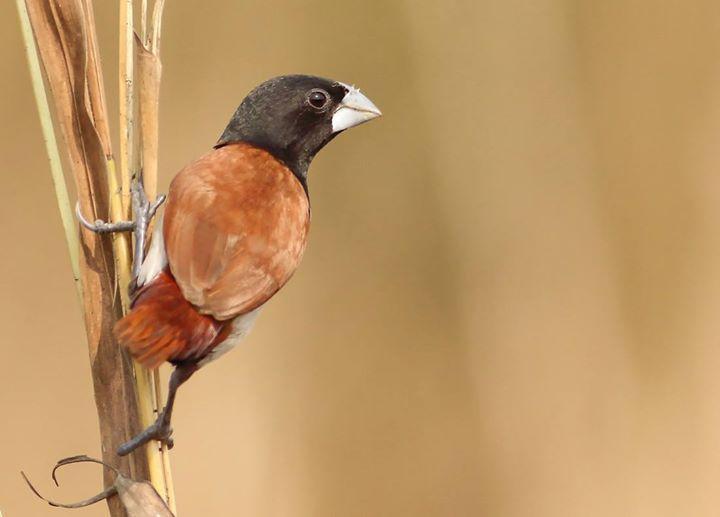 Birdwatch Special Dhampur Tour