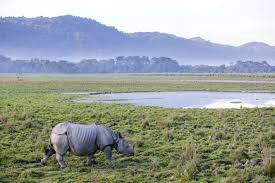 Wildlife Of Manas National Park Tour Package