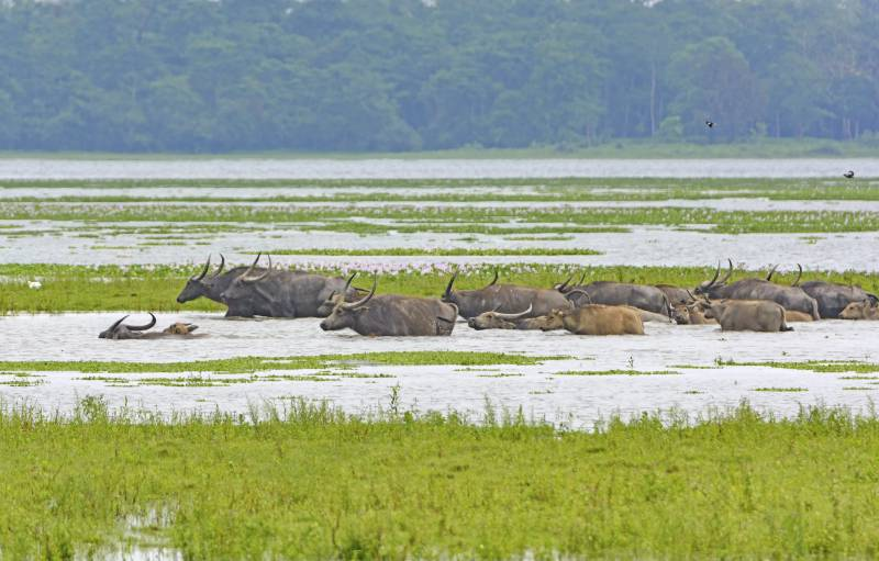 Discover Assam Tour Package.