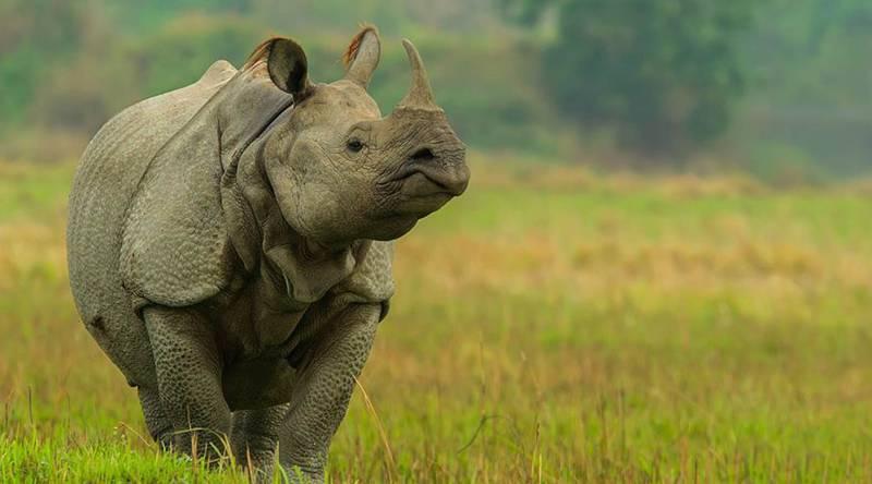 Wildlife Of Kaziranga National Park Package