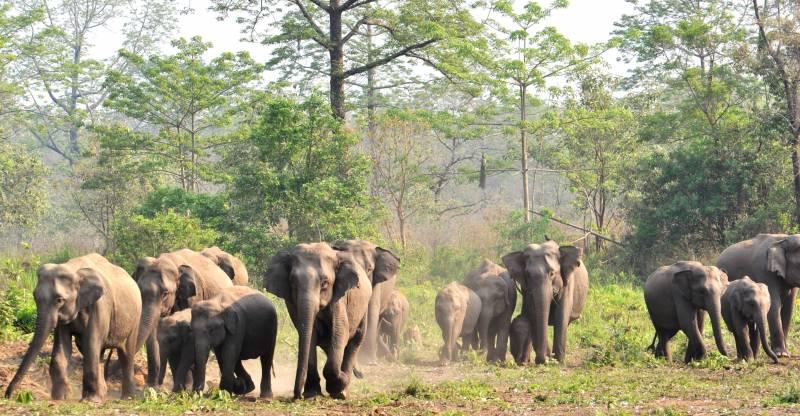 Wildlife Of Manas National Park Package