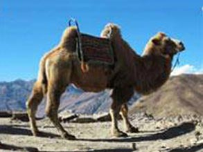 07-Nights Ladakh Tour