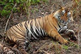 Odisha (Orissa) Wildlife Tour