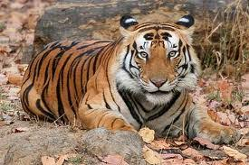 9 Days Golden Triangle Tour With Bird Watching & Tigers Safari