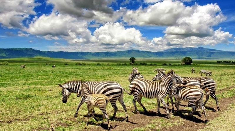 12 Days Tour To Ngorongoro Manyara Zanzibar