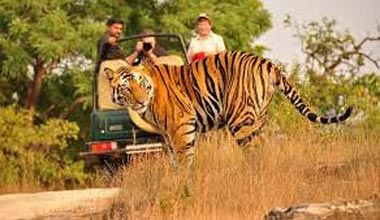 Kanha National Safari Package (M.P)