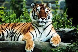 Book Kanha Kisli National Park, Kanha Wildlife Sanctuary Tour Package 2 Night/3 Day
