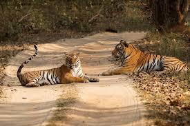 Barnawapara Wildlife Sanctuary Tour Package
