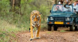 Kanha National Park Trip