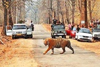 Kolkata To Kanha National Park Tour Package