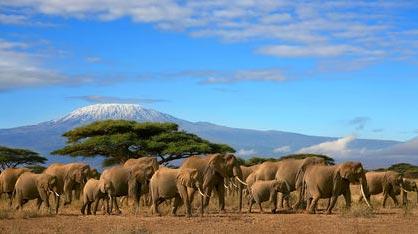 11days 10nights Tanzania & Zanzibar Safari Tour