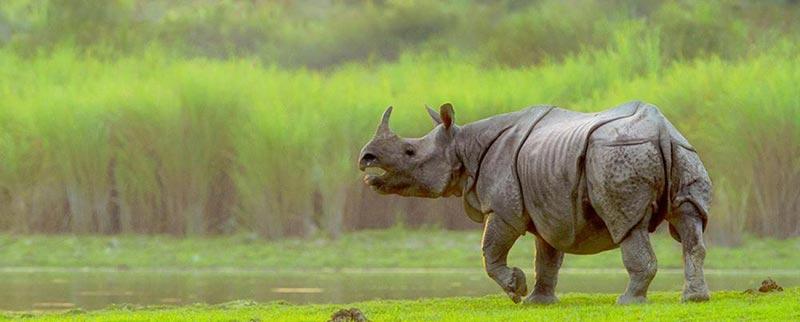 Shillong With Kaziranja National Park Tour