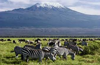 7 Days In Kenya And Tanzania - Wildlife Special Package