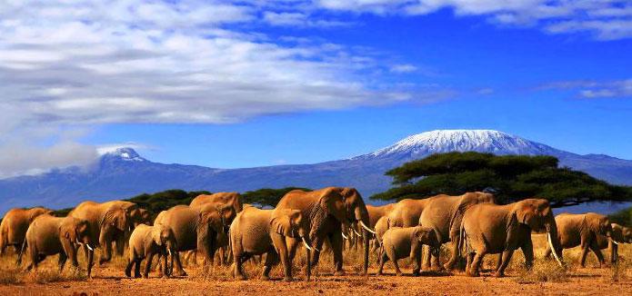 Masai Mara | Lake Naivasha And Amboseli - Kenya Tours