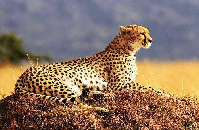 Masai Mara Adventure Safari Tour