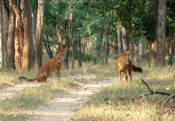 Scenic Madhya Pradesh Tour