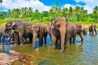 14N Explore Diverse Lanka Tour