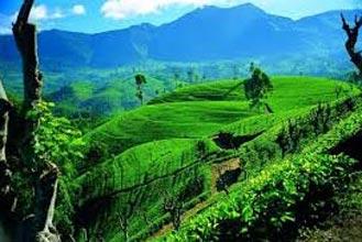 21N Explore Diverse Lanka II Tour