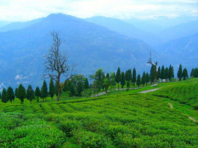 South Sikkim Tour 04 Nights / 05 Days