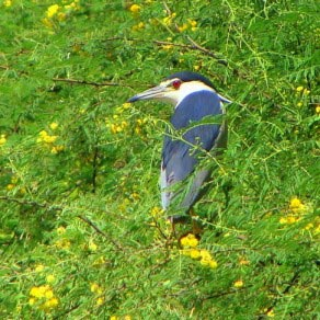 A Tour To Keoladeo National Park Package