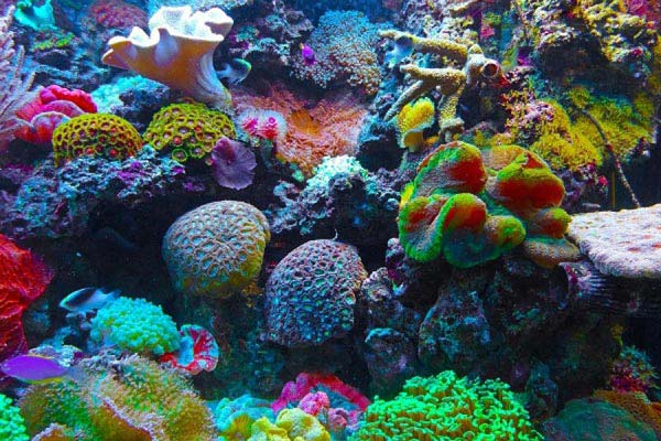 Sea Coral 6 Nights 7 Days Package