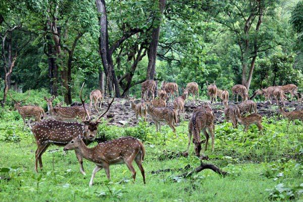 Madhumalai National Park Tour