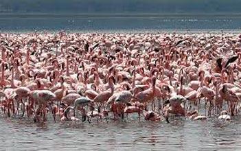 Full Day Lake Nakuru Day Trip Tour