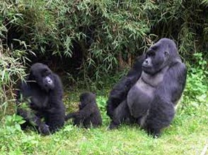 Uganda And Rwanda Combo Adventure Tour