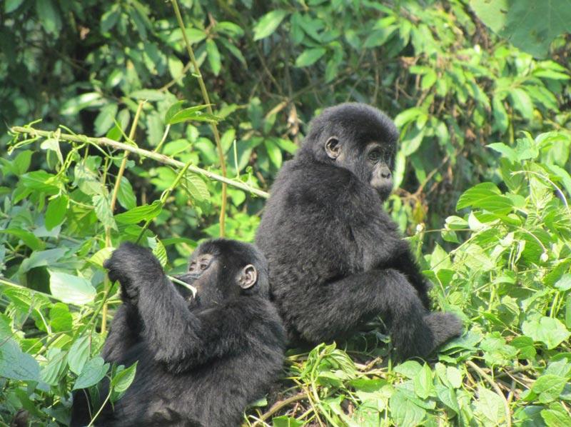 3-Day Bwindi Gorillas Tour – Short Break