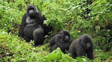 5 Days Rwanda Primate Adventure Tour