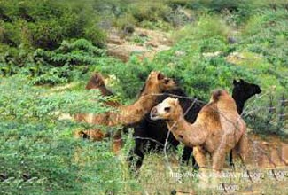 Rajasthan With Jungle Tour Package