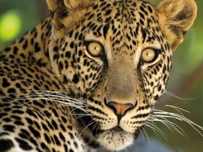 Kenya Safaris & Tour Packages Masai Mara Nakuru Amboseli