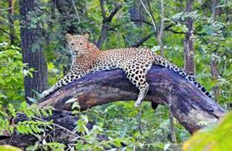 Panna Chitrakoot Wildlife Package