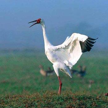 Sultanpur Bird Sanctuary Tour