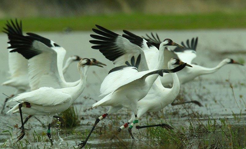 Sultanpur Bird Sanctuary Tour Package