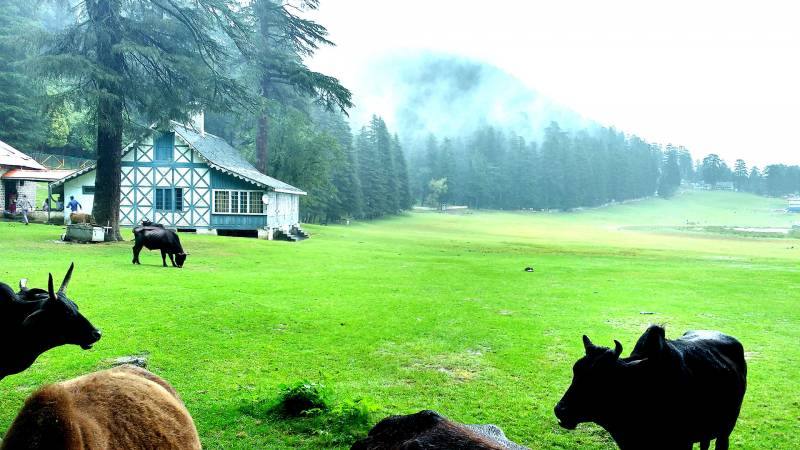 Himachal (3 Night Dharamshala + 2 Night Dalhousie ) Tour– Ex Patankot Tour