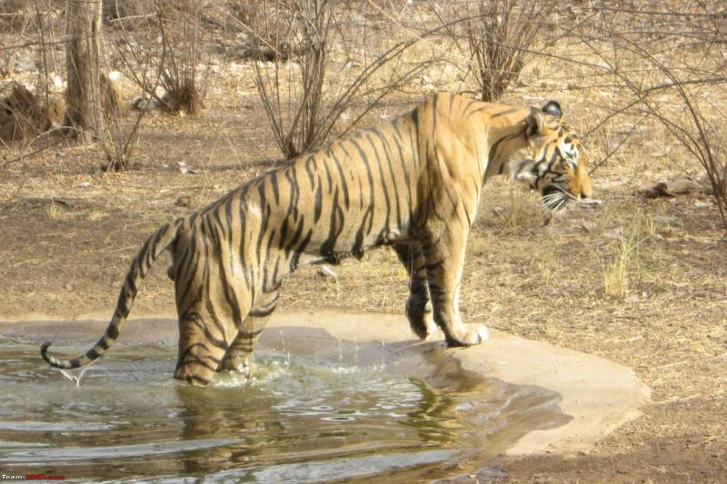 Rajasthan ( 02 Night Jaipur + 02 Night Ranthambore) – Ex Jaipur