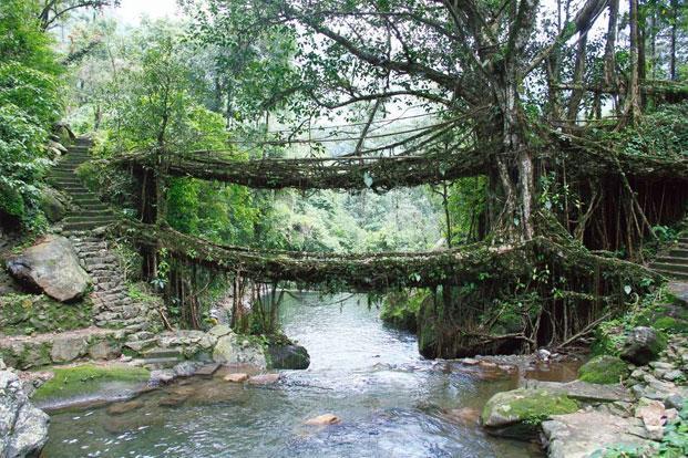 Day Trip Double Decker Living Root Bridge Tour