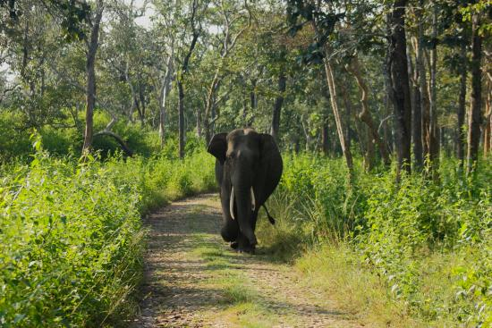 Wayanad And Kabini Tour