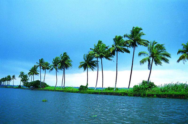Kerala Coconut Experience Tour