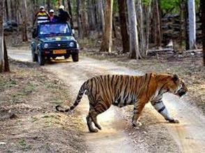 Caravan Getaway With Tadoba National Park Tour