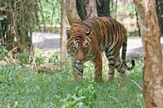 Valmikinagar Tiger Reserve Tour