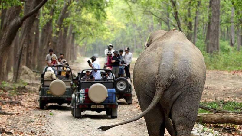 Day Visit Jungle Safari Package