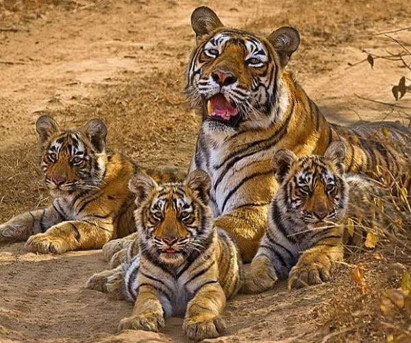 1 Night 2 Days Corbett (Jungle Safari) Tour