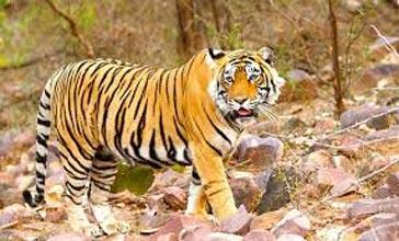 Jaipur, Ranthambore, Pushkar Tour