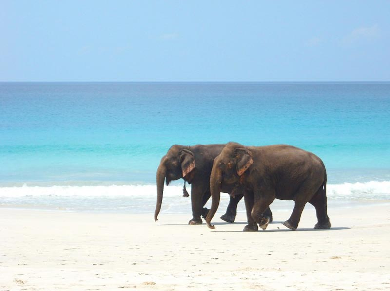 Havelock Neil Escapade Tour  5 Nights And 6 Days