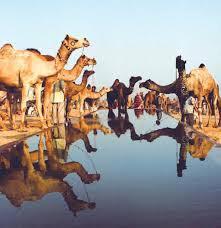 Pushkar Fair With Golden Triangle Tour